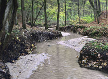 Small River At Autumn Forest Royalty Free Stock Image