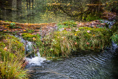 Small river in autumn beech. Stock Photo