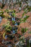 Small river in autumn beech. Royalty Free Stock Images