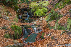 Small river in autumn beech. Royalty Free Stock Photos