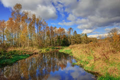 Small river in autumn Stock Photography