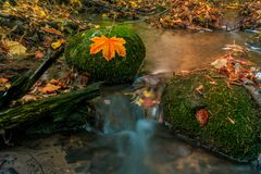 Small river in autumn colors in the forest stock photos