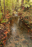 Small river in autumn. River in the autumn forest Stock Images