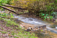 Small river in autumn forest Stock Images