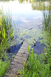 Small river bridge. natural green water flora Stock Photography