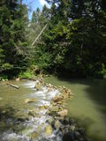 Small river in Carpathian mountains Royalty Free Stock Images