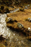 Small river on Chopicalqui Base Camp. Cordiliera Blanca royalty free stock images