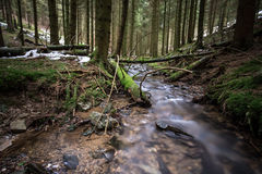 Small river in a cold winter forest Royalty Free Stock Images