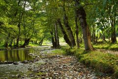 Small River in Countryside. Early Autumn Scene in Countryside with Small Tranquil River Stock Image