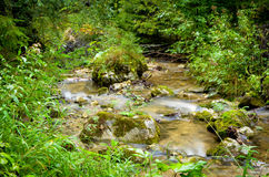 Small river in the countryside. Mala Fatra, Slovakia Stock Photography