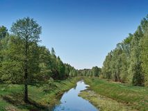 Small river in deciduous forest Royalty Free Stock Photography
