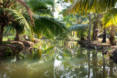 Small river in deep tropical rain forest Stock Images