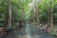 Small river in deep tropical rain forest in summer Stock Photography