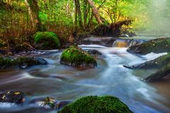 Small river flow in forest Royalty Free Stock Photos