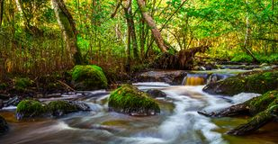 Small river flow in forest Royalty Free Stock Images
