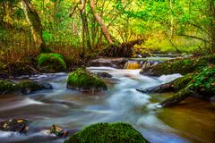 Small river flow in forest Royalty Free Stock Photography