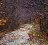 Small river flowing through beech forest Stock Images