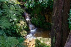 Small river flowing in a gorge, Caldeira Velha, Sao Miguel Island, Azores, Portugal stock photos