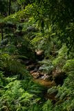 Small river flowing in a gorge, Caldeira Velha, Sao Miguel Island, Azores, Portugal royalty free stock photos