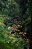 Small river flowing in a gorge, Caldeira Velha, Sao Miguel Island, Azores, Portugal stock images