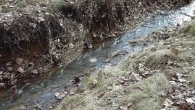 Small river flowing between old grass and foliage. Clear water running in park or forest. lot or brown leaves around. Natural landscape with clear water stock video