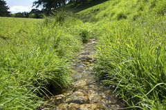 A small river flowing through a park Royalty Free Stock Photo