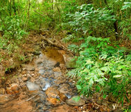 Small river flowing through rocks in jungle. Small river flowing through rocks and a large stone in jungle of Khao Sok National Park, Surat Thani Province Royalty Free Stock Images
