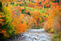 Small river flowing through Vermont. Fall foliage Royalty Free Stock Image