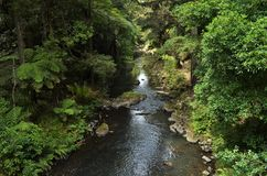 Small river flowing through vibrant green forest with exotic plants stock photo