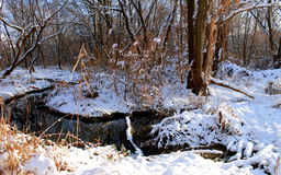 The  small river flows in the winter forest. Stock Images