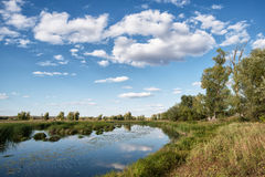 Small river forest Royalty Free Stock Image