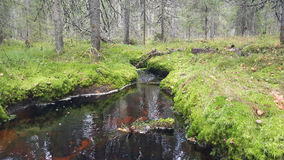 Small river in the forest Stock Photography