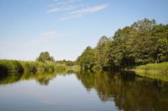 Small river in forest Royalty Free Stock Photos