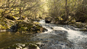 Small river. Forest thicket with the small river Stock Photography