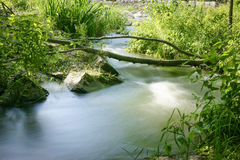 Small river in a forest. Stock Photos