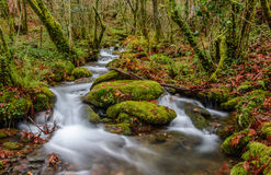 Small river in Fragas do Eume Stock Image