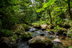 A small river in the green dense jungle Royalty Free Stock Image