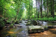 Small river in the green forest Stock Image