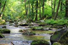 Small river in the green forest Stock Photo
