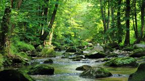 Small river in the green forest Royalty Free Stock Images