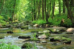Small river in the green forest Stock Images