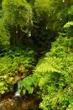 Small River In The Hawaian Jungle. Big Island, USA, EEUU Stock Photos