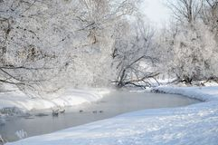 A small river ice and snow covered trees and waterfowl