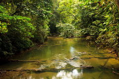 Small river in jungle Royalty Free Stock Image