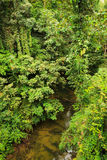 Small river in jungle Stock Images