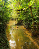 Small river in jungle Royalty Free Stock Photography