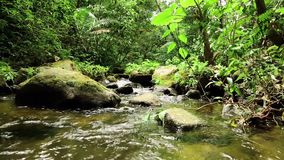 A small river in the jungle stock video footage