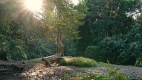 Small river in the jungle. Of Khao Yai National Park. Thailand. Footage shot at winter season time stock video footage