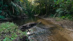 Small river in the jungle. Of Khao Yai National Park. Thailand. Footage shot at winter season time stock footage