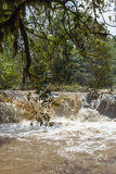A small river in Kakamega Forest. Kenya. Africa Royalty Free Stock Images